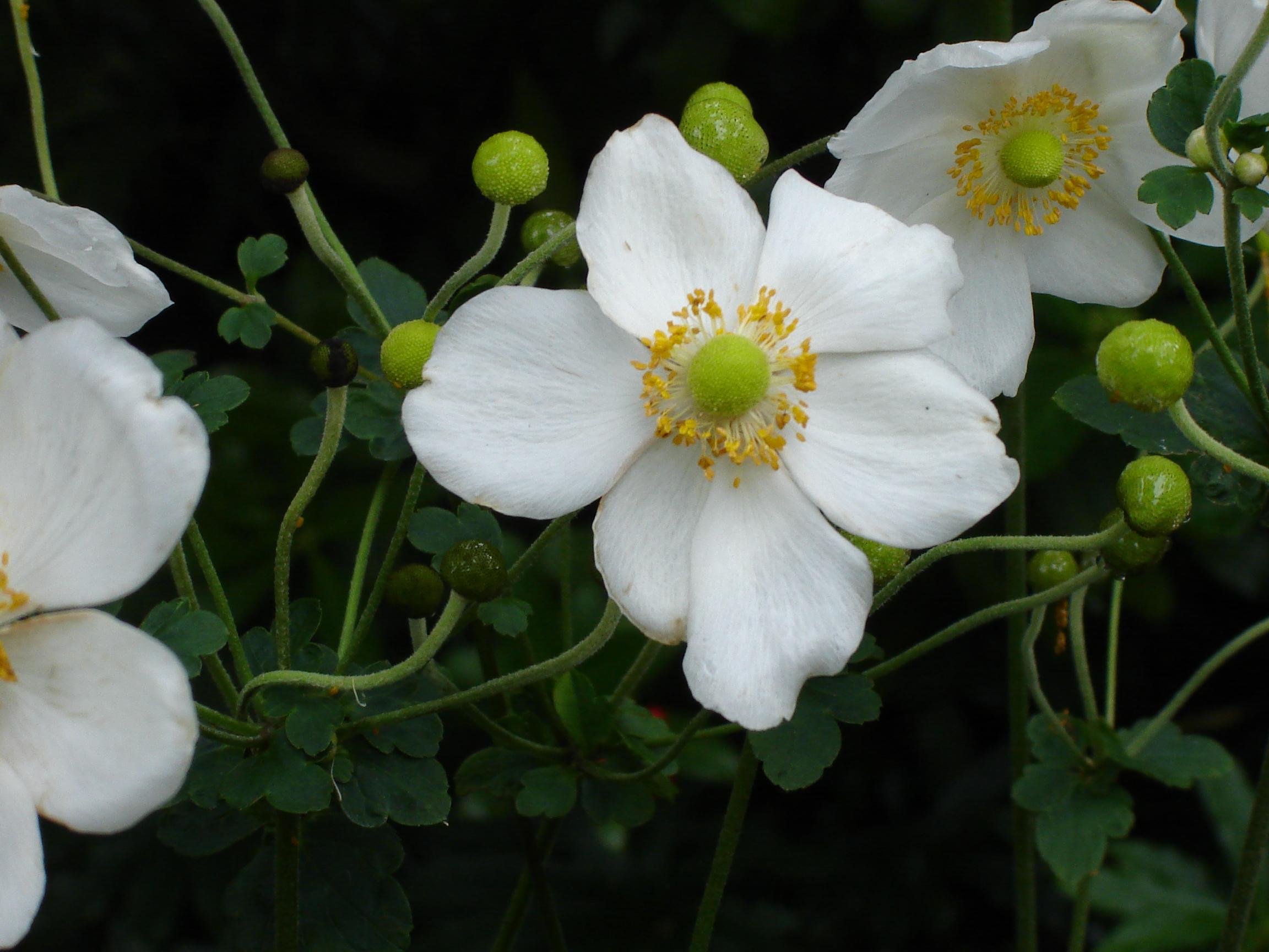 Blumen von Isole di Brissago