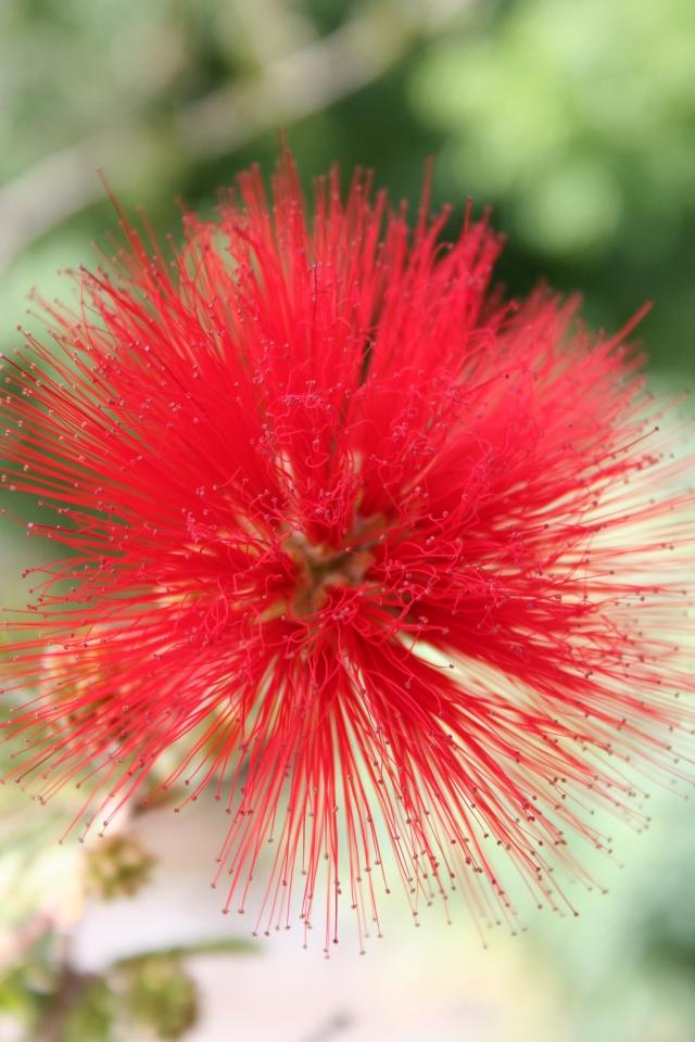 Blumen4