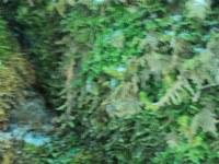 Ein Wackelbild vo Winterausflug an die Halbammer. In der Farbe verstärkt, sonst nicht nachbearbeitet.