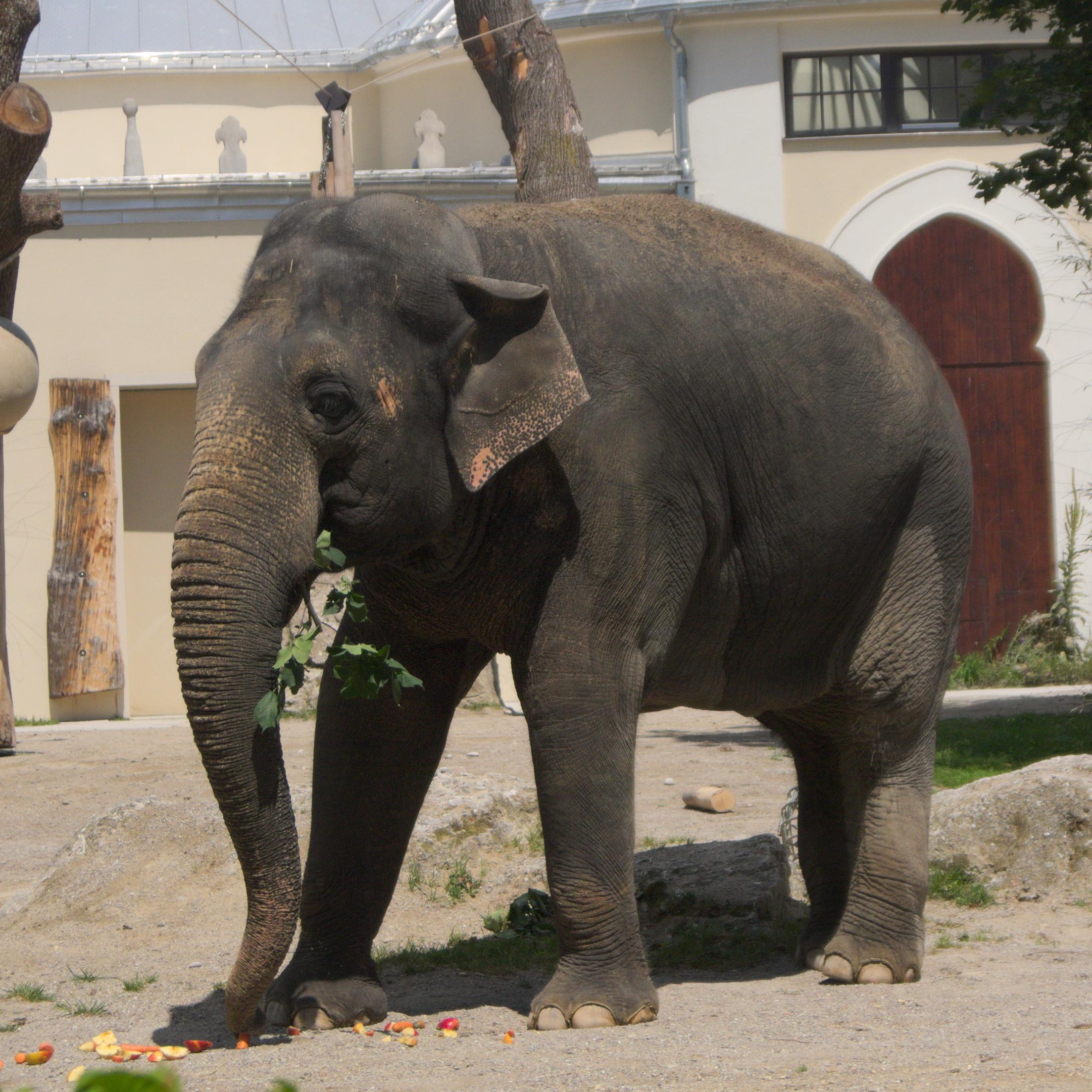 Tierpark München