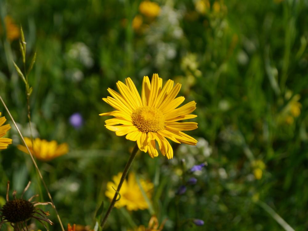 Blütenwanderung Andechs