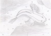 Ein Fisch mit urzeitlichen Flossen im Fluss