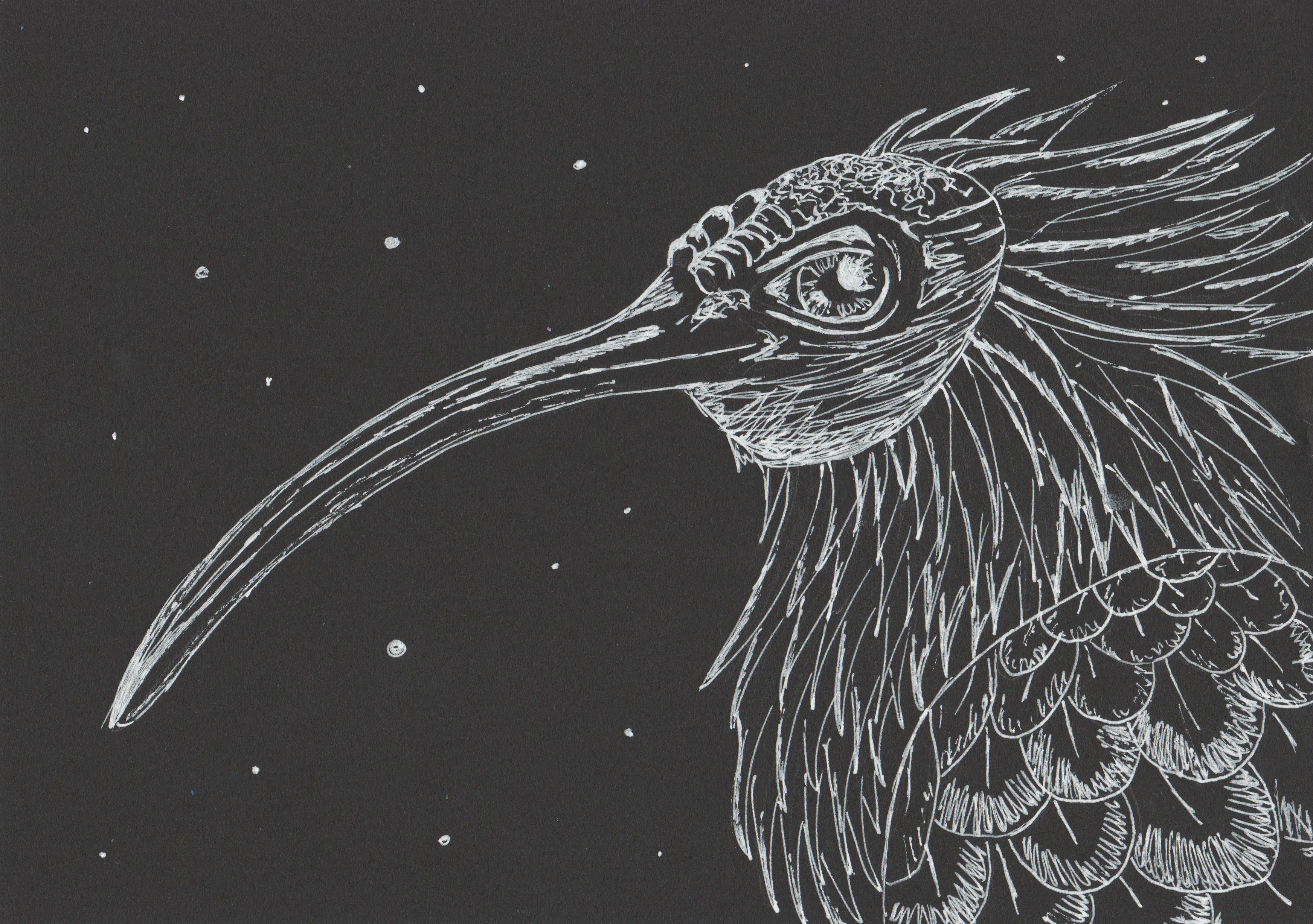 Vogel bei Nacht