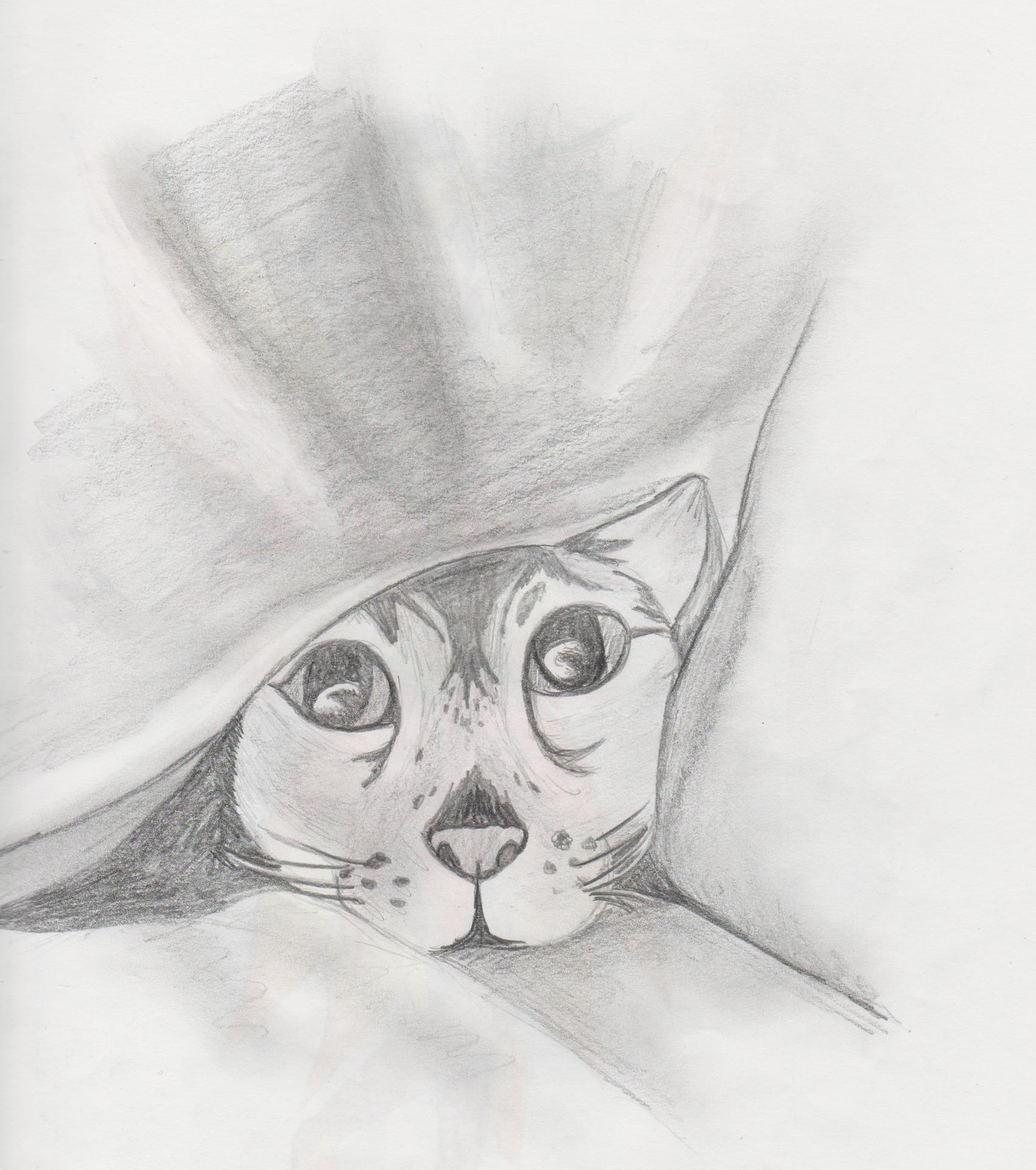 Katze im Versteck
